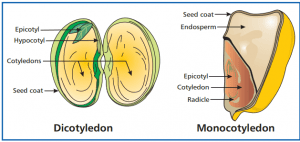 Parts of Seed