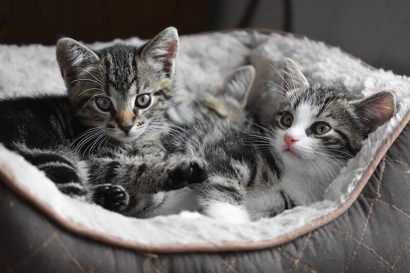 cat in the cradle